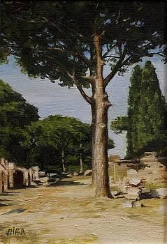 Arbol- Umbrella Pine by Lydia Martin