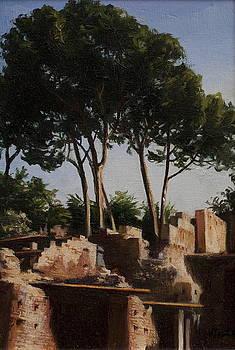 Arbol- Umbrella Pines by Lydia Martin