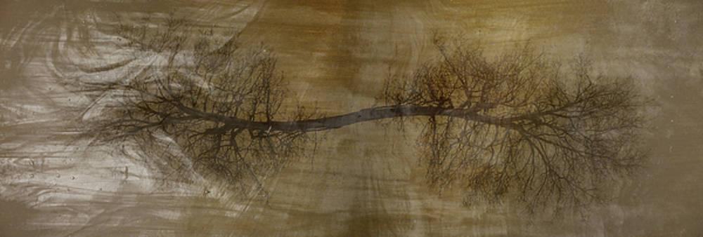 Arbor One by Kevin Blackburn