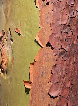 Arbutus Tree by Sherry Leigh Williams