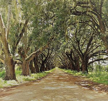 Arch Way of Old Oak Trees by Deborah Chase
