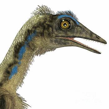 Corey Ford - Archaeopteryx Dinosaur Head