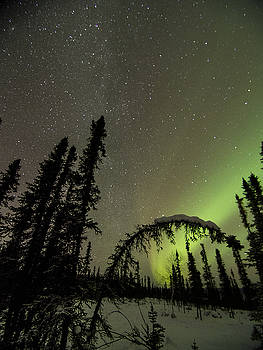 Ian Johnson - Arched Spruce Aurora