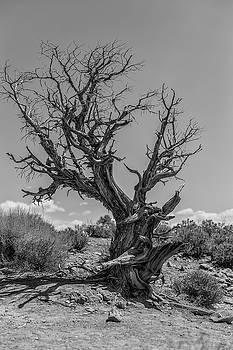 Arches National Park The Tree by John McGraw