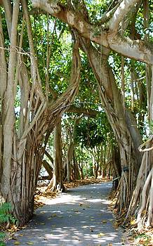 Archway at Selby Gardens Sarasota Florida by Sheryl Unwin