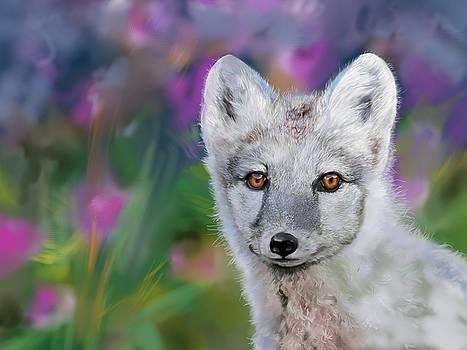Newfoundland Arctic Fox Puppy  by Cassandra Gallant