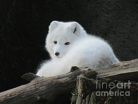 Arctic Fox by Heike Ward