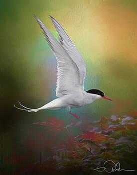Arctic Tern landing by Gloria Anderson