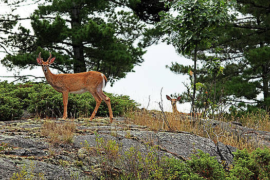 Debbie Oppermann - Are They Gone Yet