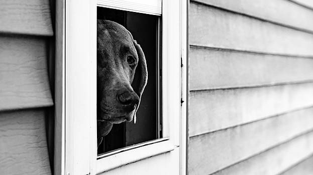 Are you home yet? by J Austin