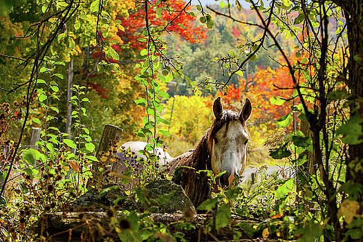 Are you my friend? by Jeff Folger