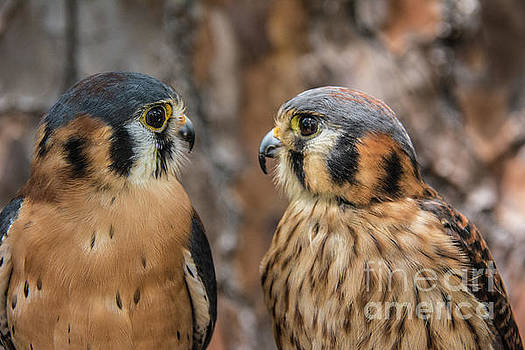 Are You Talking to Me? by John Greco