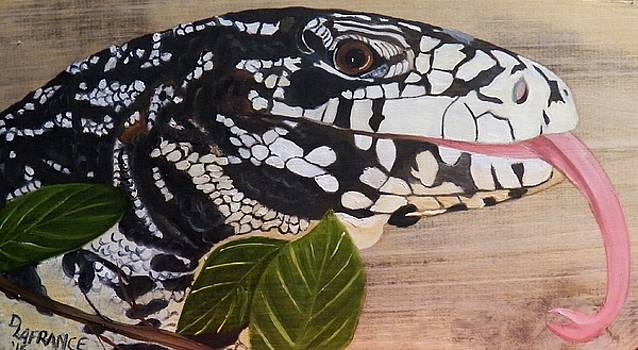 Argentine black and white Tegu by Debbie LaFrance