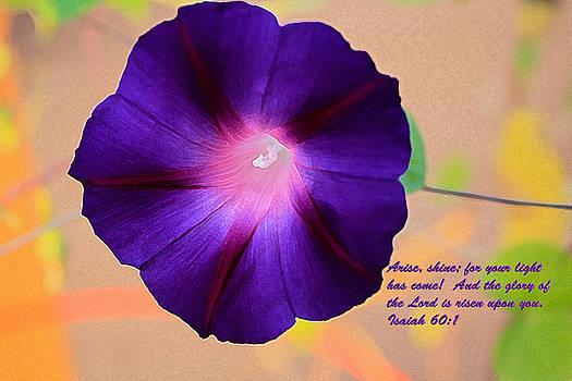 Arise by Barbara Dean