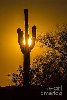 Arizona Cactus #1 by Daniel  Knighton