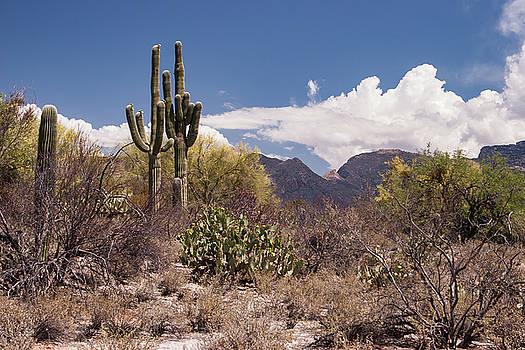 Arizona Desert by David Palmer