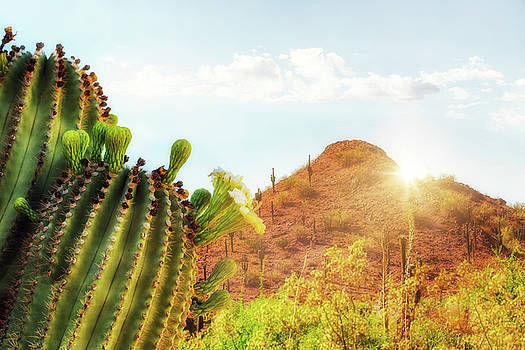Arizona Desert Scene With Mountain and Cactus by Susan Schmitz