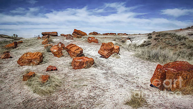 Arizona Fake Rocks by Jon Burch Photography