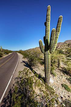 Arizona Highway by Ed Cilley