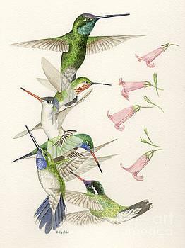 Arizona Hummingbirds by Scott Rashid