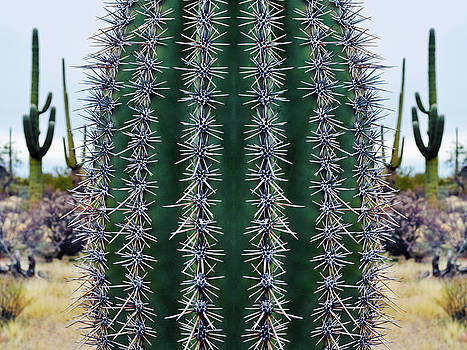 Arizona Saguaro Mirror by Kyle Hanson