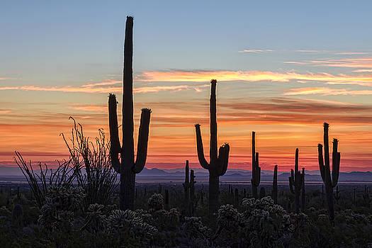 Arizona Sunrise by Ryan Seek