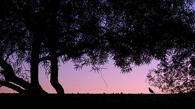 Arizona Sunset Friend by Glenn DiPaola