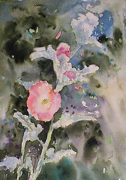 Arizona Wild Flowers by Wendy Hill