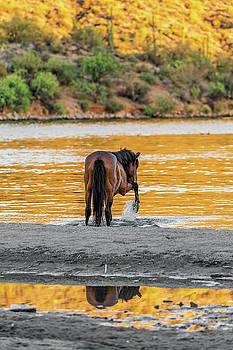 Arizona Wild Horse Playing in Water by Susan Schmitz