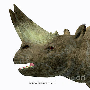 Arsinoitherium Mammal Head by Corey Ford