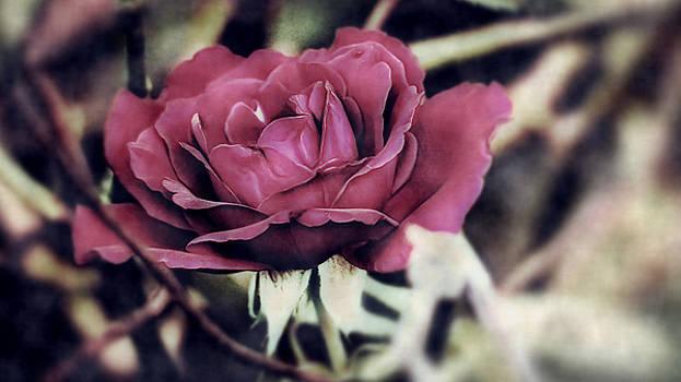 Art Full Rose by Philip A Swiderski Jr