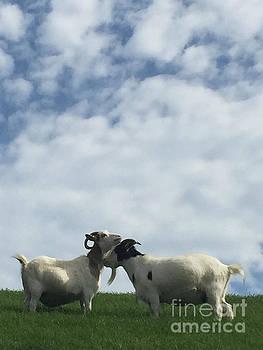 Art Goats II by Margie Hurwich