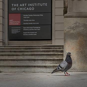 Cynthia Traun - Art Institute Canidate
