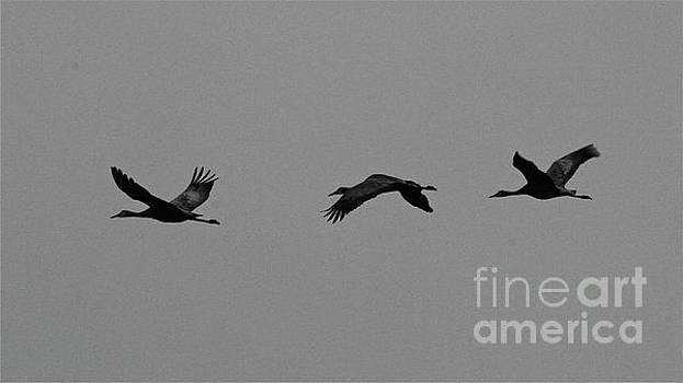 Art Of Flight by Rick Monyahan