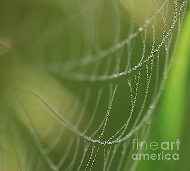 Art of Nature - Unique Strands  by Kerri Farley