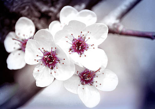Milena Ilieva - Art of Spring