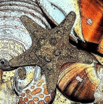 Art Shell 1 by Stephanie Troxell