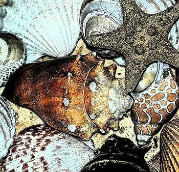 Art Shell 3 by Stephanie Troxell
