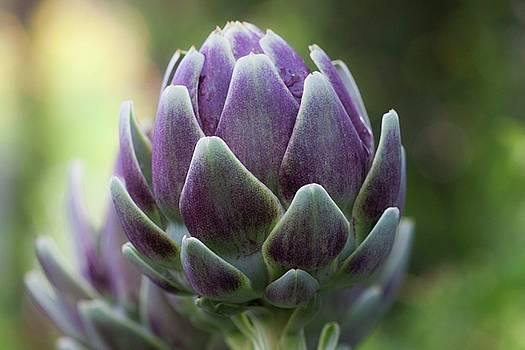 Artichoke In Eggplant Purple by Ruth Jolly