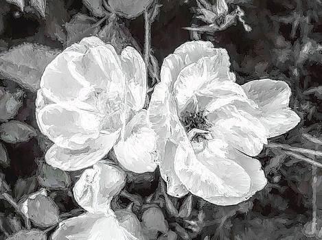 Artistic Behavior Of Roses by Debra Lynch