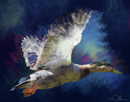 Artistic duck in flight by Gloria Anderson