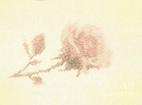 Artistic Etched Rose by Linda Phelps