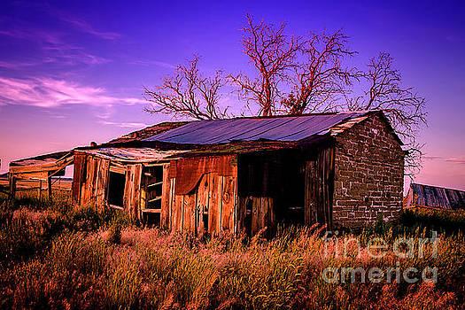 Colorado Shack by Thomas Levine