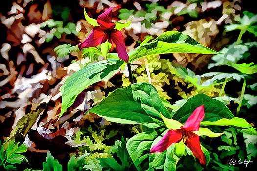 Artistic Red Trilliums by Phill Doherty