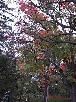 Artsy Tree by Deborah Finley
