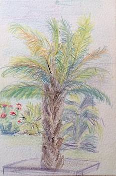 Aruba Palm Tree by Katherine  Berlin