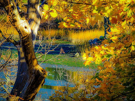 As Fall Leaves by Glenn Feron