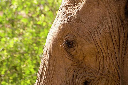 Howard Kennedy - As High as an Elephant