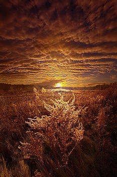 As It Was In The Beginning by Phil Koch