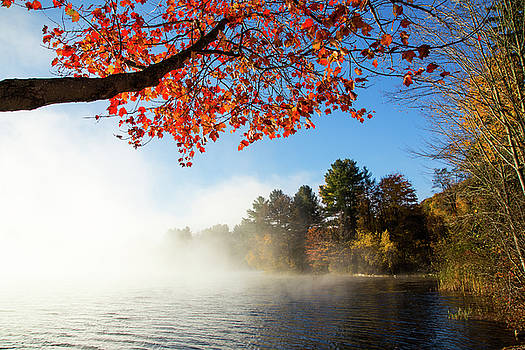 Karol Livote - As The Fog Leaves